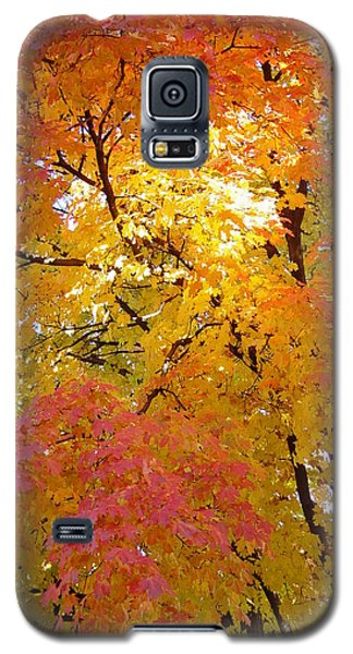 Galaxy S5 Case featuring the photograph Sunkissed 2 by Elizabeth Sullivan
