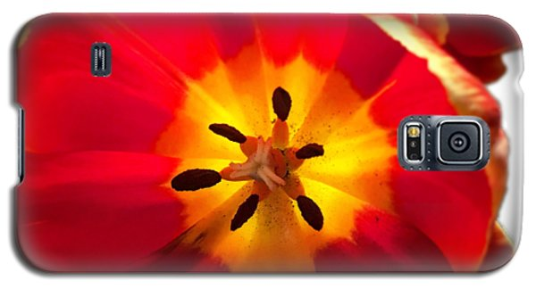 Sunkissed Tulips Galaxy S5 Case