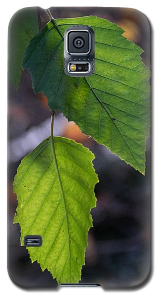 Sunlight Through Birch Leaf Branch Galaxy S5 Case