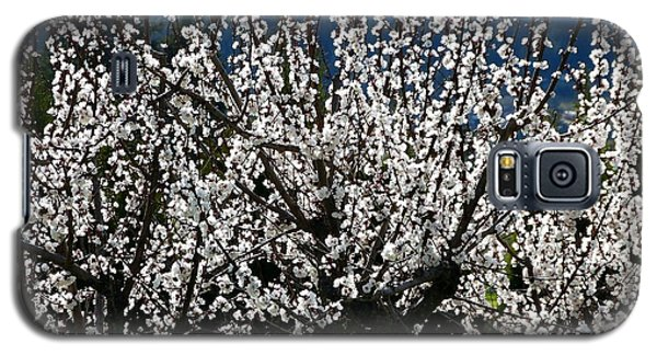 Sunlit Apricot Blossoms Galaxy S5 Case by Will Borden