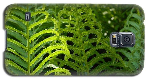 Sunlit Fern Galaxy S5 Case