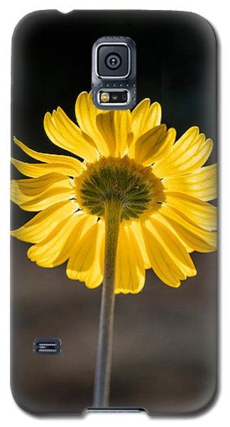 Sunlit Four-nerve Daisy  Galaxy S5 Case