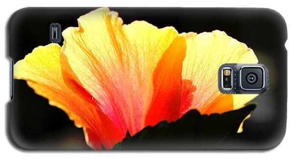 Galaxy S5 Case featuring the photograph Sunlit Hibiscus by Diane Merkle