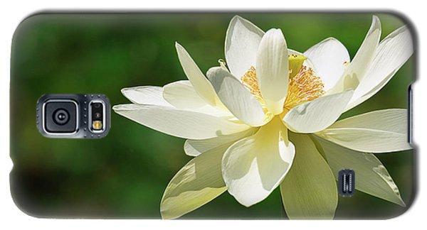 Sunlit Lotus Blossom Galaxy S5 Case