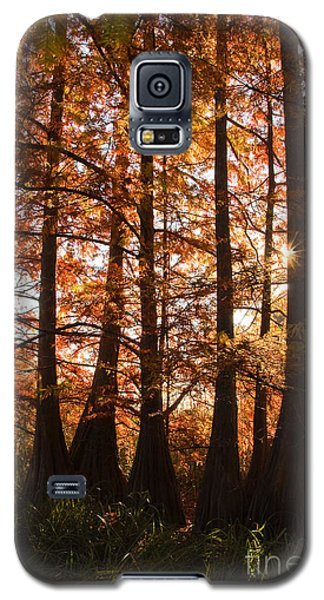 Galaxy S5 Case featuring the photograph Sunlit Trees At Lake Murray by Tamyra Ayles