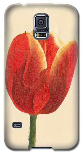 Sunlit Tulip Galaxy S5 Case by Phyllis Howard