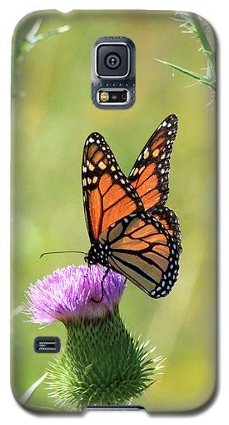 Sunlit Monarch Galaxy S5 Case