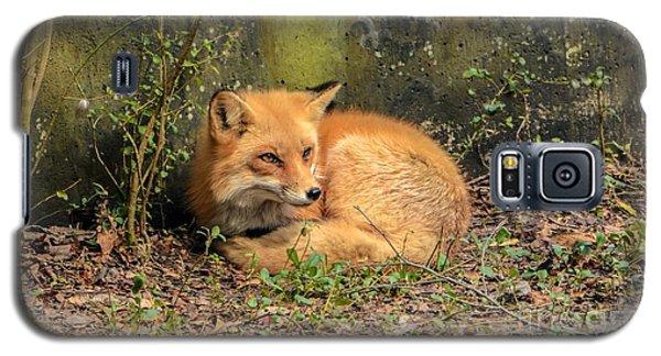 Sunning Fox Galaxy S5 Case