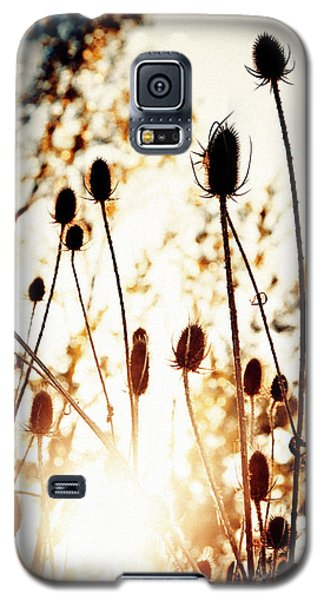 Sunny Afternoon Galaxy S5 Case