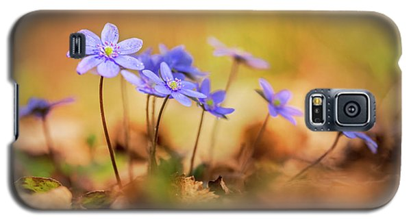 Galaxy S5 Case featuring the photograph Sunny Afternoon With Liverworts by Jaroslaw Blaminsky