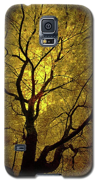Galaxy S5 Case featuring the painting Sunny Branches by Gray  Artus