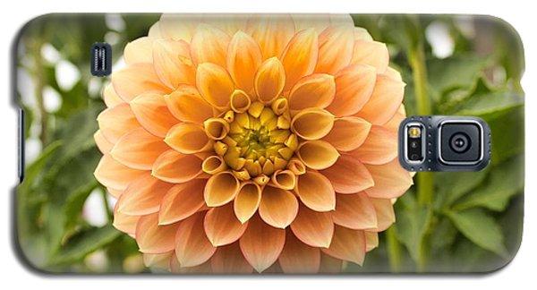 Sunny Dahlia Galaxy S5 Case