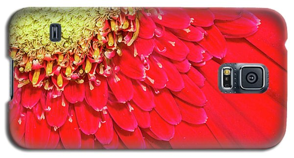 Sunny Detail Galaxy S5 Case