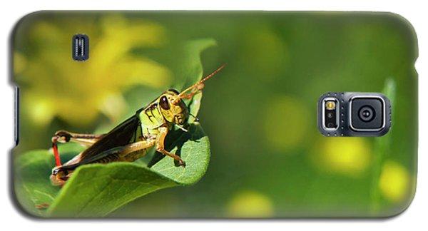 Green Grasshopper Galaxy S5 Case by Christina Rollo