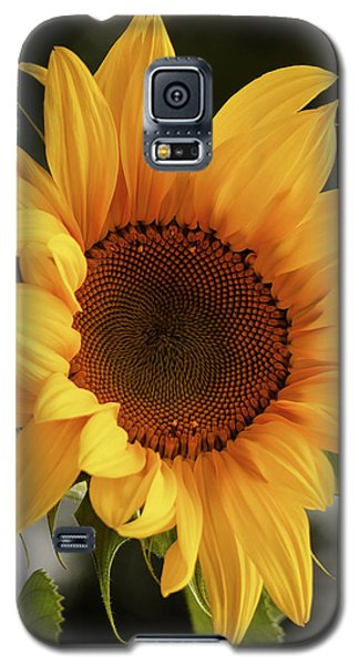 Galaxy S5 Case featuring the photograph Sunny Sunflower by Jordan Blackstone