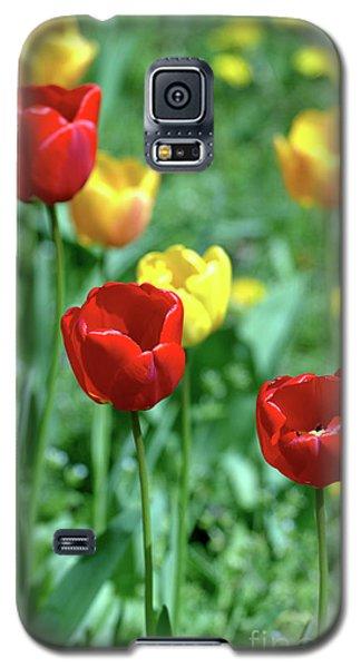 Sunny Tulips Galaxy S5 Case