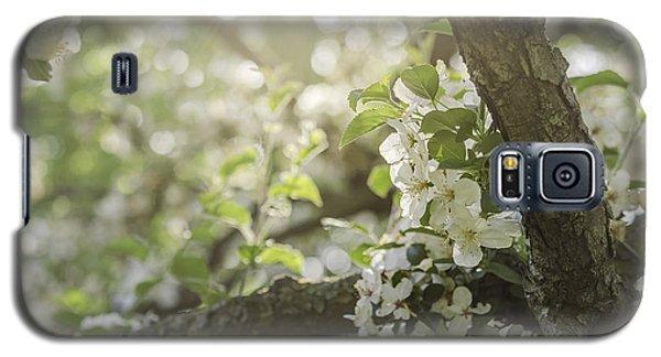 Sunrise Blossoms Galaxy S5 Case