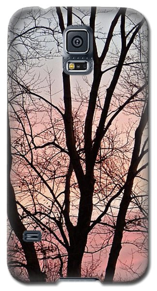 Sunrise Branches Galaxy S5 Case