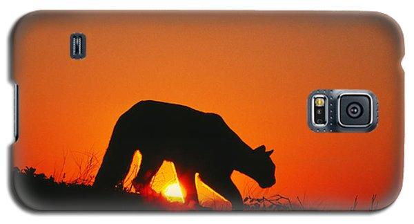 Sunrise Stalk Galaxy S5 Case