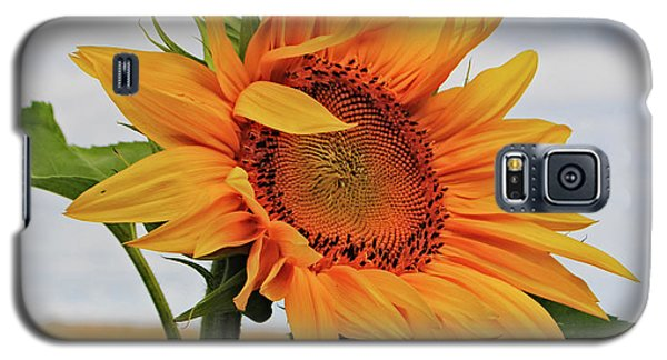Sunrise Sunflower Galaxy S5 Case by Kathleen Sartoris