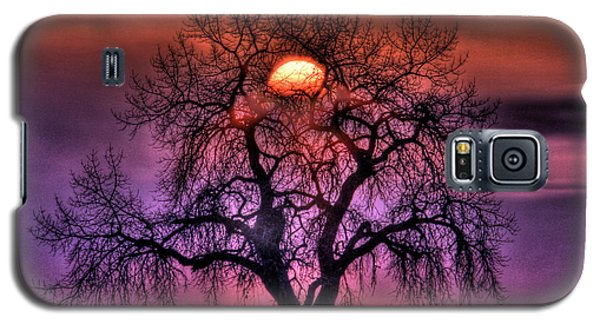 Sunrise Through The Foggy Tree Galaxy S5 Case by Scott Mahon