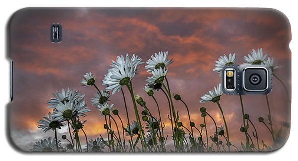 Sunset And Daisies Galaxy S5 Case