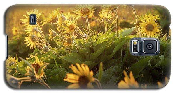 Sunset Balsam Galaxy S5 Case