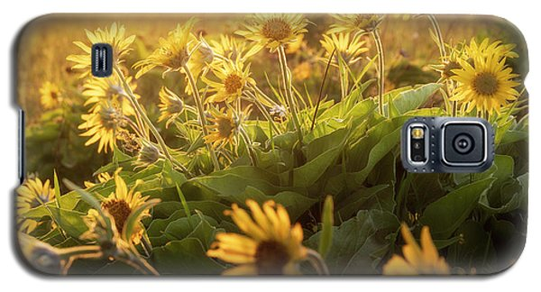 Sunset Balsam Galaxy S5 Case
