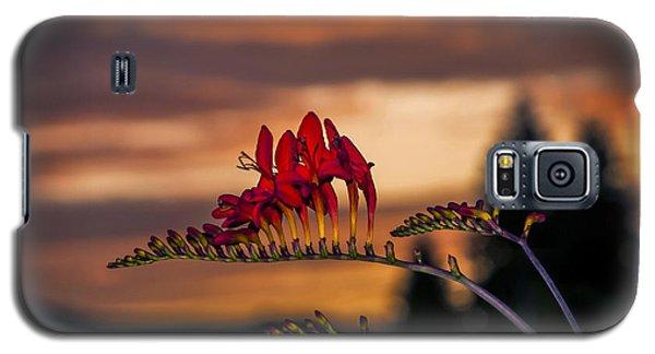 Sunset Crocosmia Galaxy S5 Case