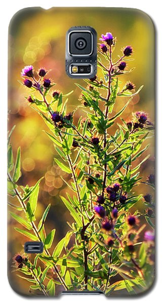 Galaxy S5 Case featuring the photograph Sunset Flowers by Christina Rollo