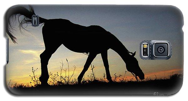 Sunset Horse Galaxy S5 Case