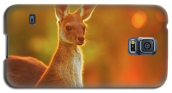 Galaxy S5 Case featuring the photograph Sunset Joey, Yanchep National Park by Dave Catley