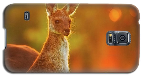 Sunset Joey, Yanchep National Park Galaxy S5 Case by Dave Catley