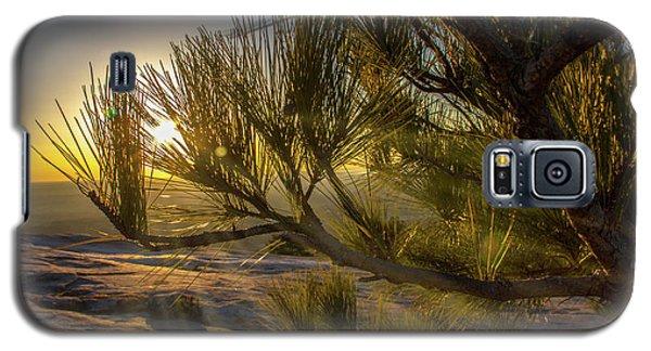Sunset Pines Galaxy S5 Case