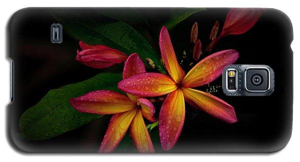 Sunset Plumerias In Bloom #2 Galaxy S5 Case