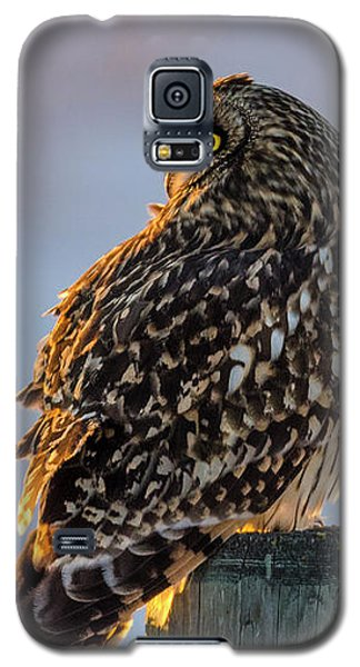 Sunset Short-eared Owl Galaxy S5 Case