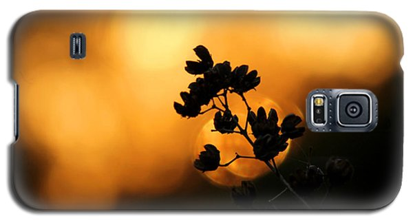 Sunset Silhouette Of Foliage Galaxy S5 Case