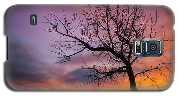 Sunset Tree Galaxy S5 Case by Darren White