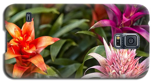 Galaxy S5 Case featuring the photograph Sunshine by Linda Constant