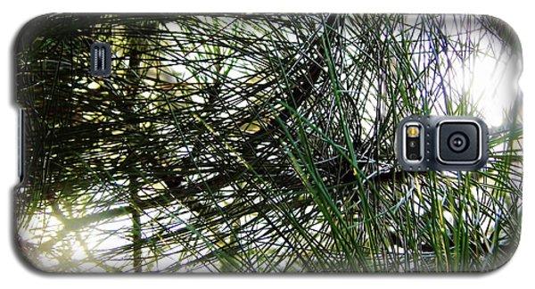 Sunshine Through Pine Needles Galaxy S5 Case