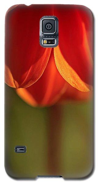 Super Frizz Galaxy S5 Case