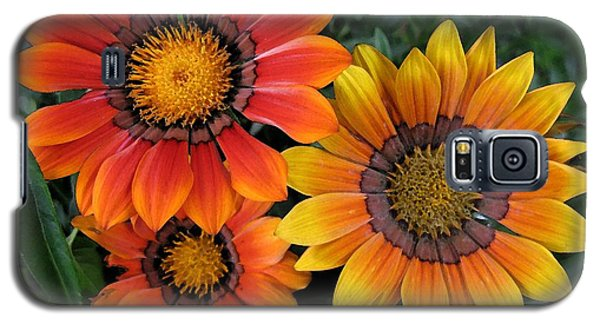 Surprise Galaxy S5 Case by Carol Sweetwood