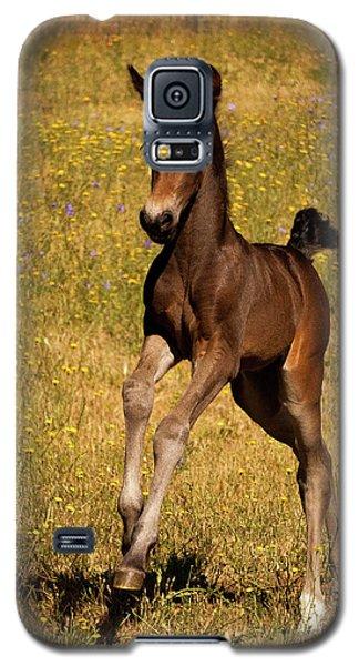 Surprise Party Galaxy S5 Case