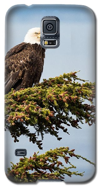 Surveying The Treeline Galaxy S5 Case