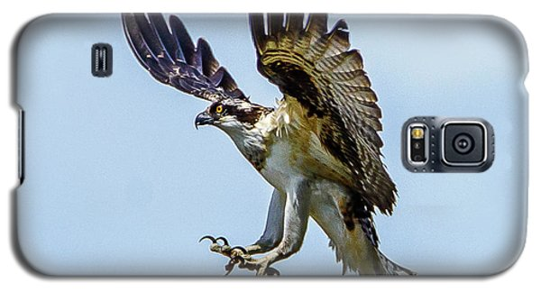 Suspended Osprey Galaxy S5 Case by Jerry Cahill
