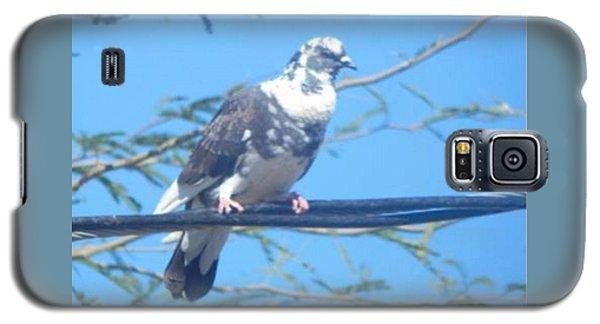 Suspicious Bird Galaxy S5 Case