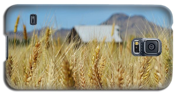 Sutter Buttes Wheat  Galaxy S5 Case