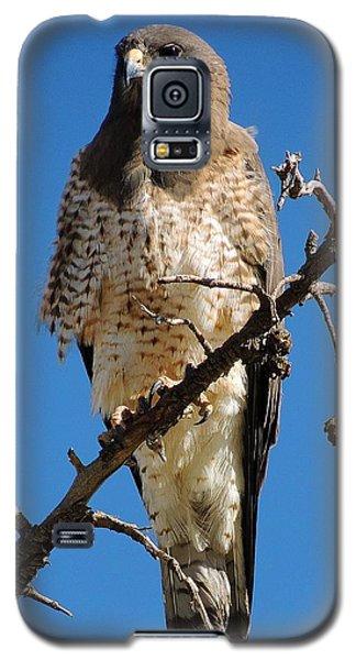 Swainson's Hawk Galaxy S5 Case