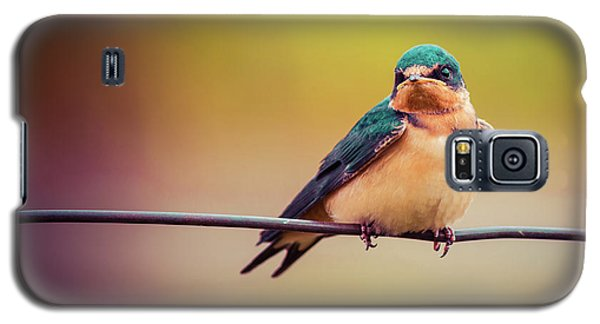 Swallow Galaxy S5 Case by Mary Hone