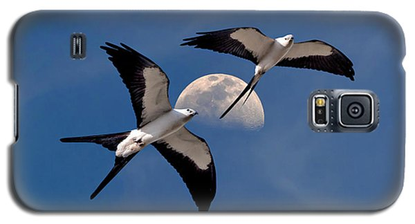 Swallow Tail Kites In Flight Under Moon Galaxy S5 Case by Justin Kelefas